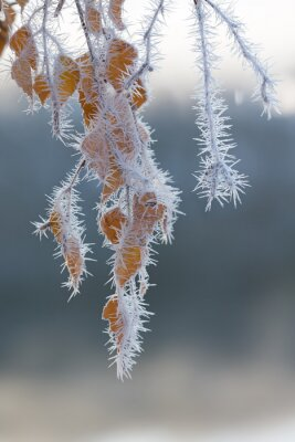 Wall mural Frost covered tree branches