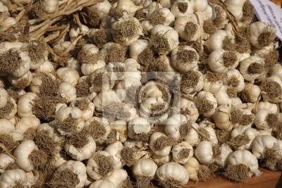 Wall mural garlic