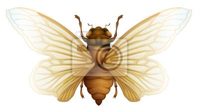 Generic cicada illustration