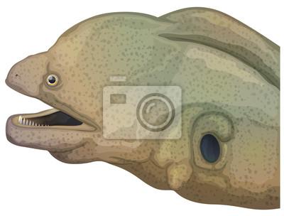 Giant moray eel head