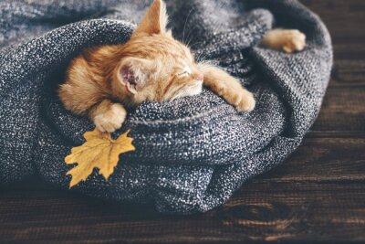 Wall mural Gigner kitten sleeping