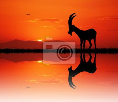 goat at sunset