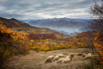 Wall mural Golden autumn / Amazing autumn view of a mountain meadow in the central Balkan Mountains, Bulgaria