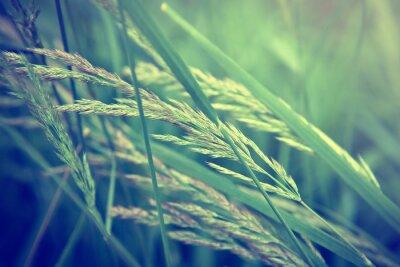 Wall mural grass