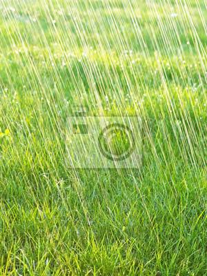 grass and rain - background