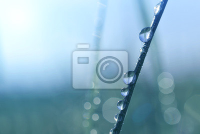Grass with water drops on bokeh background. Morning dew with sunlight close up.