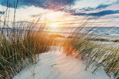 Wall mural Grassy dunes and the Baltic sea at sunset
