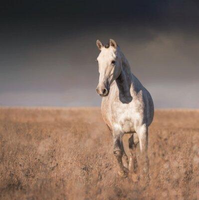 Wall mural Gray horse run