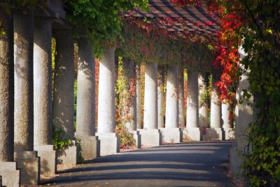 Wall mural Green archway in the park in autumn