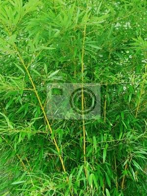green bamboo