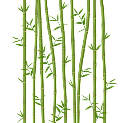 Wall mural Green bamboo with leaves isolated on white background