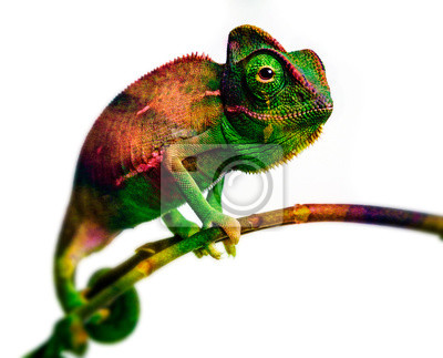 Wall mural green chameleon - and water colors