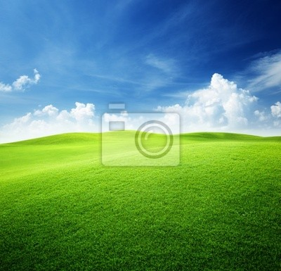 Wall mural green field and blue sky