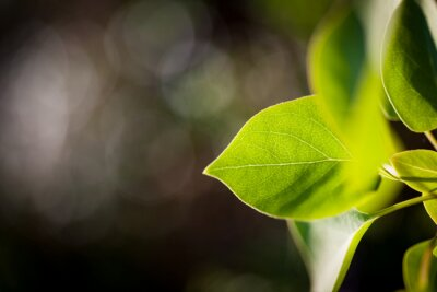 Green fresh leaf illuminated by sunlight