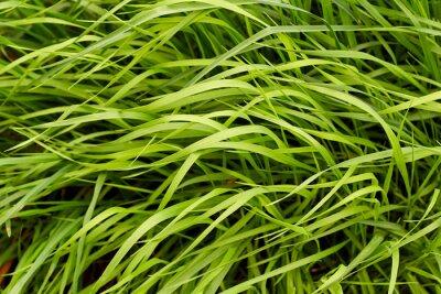 Wall mural Green grass background