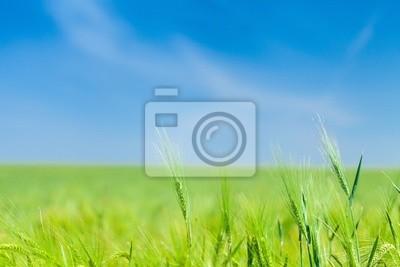 Green horizons big summer skies
