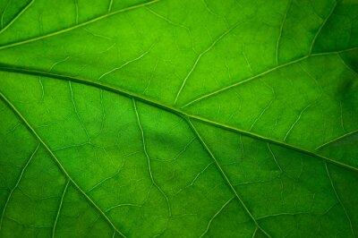Wall mural Green leaf