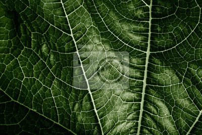 green leaf close up - texture in the detail