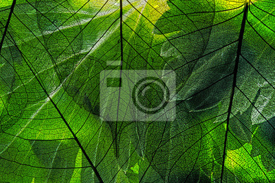 green leaf in the detail
