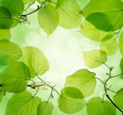 Wall mural green leaves background
