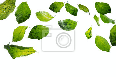 green leaves falling down
