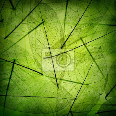 Green leaves vintage background
