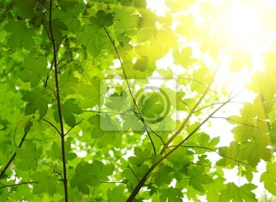 Wall mural Green leaves with sun ray.