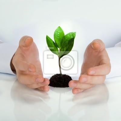 Green plant between business man's hands