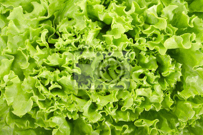 Wall mural Green salad background