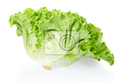Wall mural Green salad head on white, clipping path included