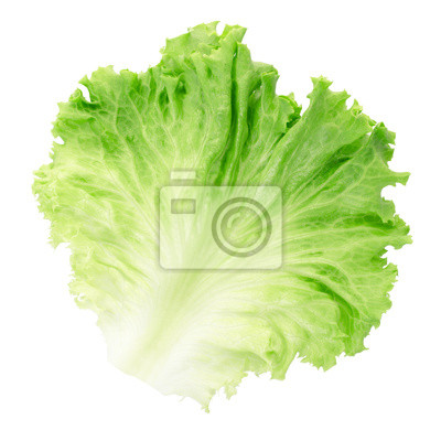 Wall mural Green salad leaf isolated, clipping path included