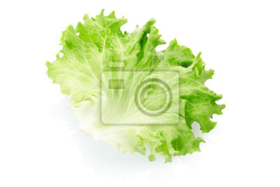 Wall mural Green salad leaf on white, clipping path included