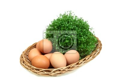 Green spring cress and chicken eggs in a basket. Isolated .