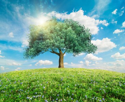 Wall mural Green tree spring landscape