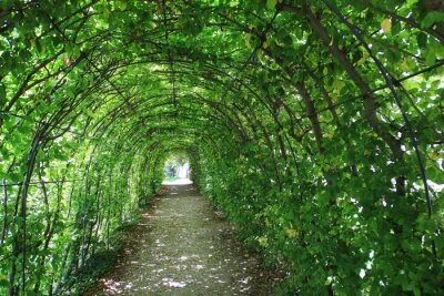 Wall mural Green tunnel in the garden