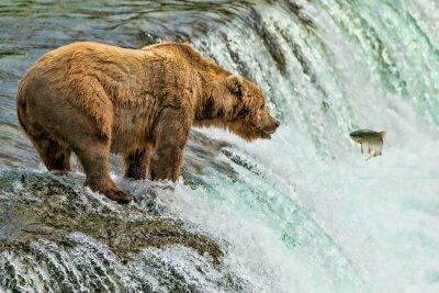 Wall mural Grizzly Bear Katmai National Park Alaska