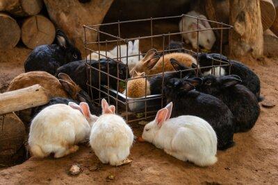 group of rabbit eating fruit