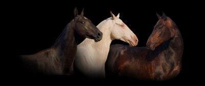 Group portrait of achal-teke horse banner