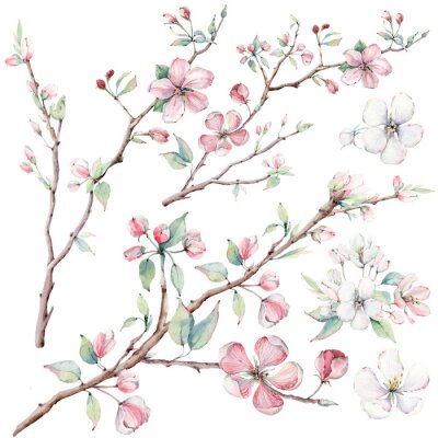 Wall mural hand drawn apple tree branches and flowers, blooming tree.