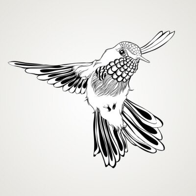 Wall mural Hand drawn flying humming bird vintage style.