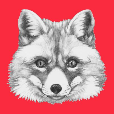 Wall mural Hand drawn portrait of Fox with glasses. Vector isolated elements.