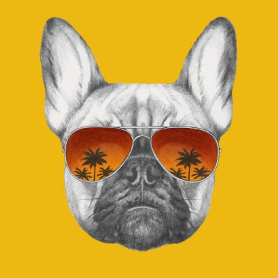 Wall mural Hand drawn portrait of French Bulldog with mirror sunglasses. Vector isolated elements.
