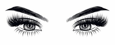 Wall mural Hand-drawn woman's sexy makeup look with perfectly perfectly shaped eyebrows and extra full lashes. Idea for business visit card, typography vector. Perfect salon look