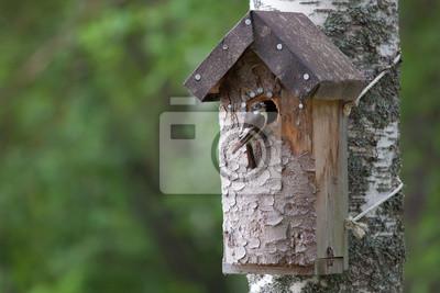 Wall mural Handmade birdhouse and a small bird