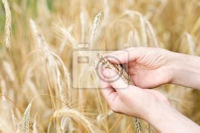 Hands harvest control