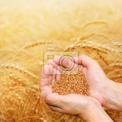 Wall mural Hands of the grain-grower against a wheaten field