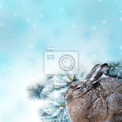 Wall mural hare and winter background