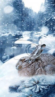 hare in winter forest