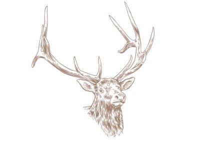 Wall mural Head of deer