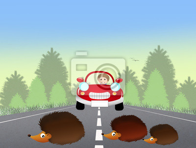 Hedgehogs on the road